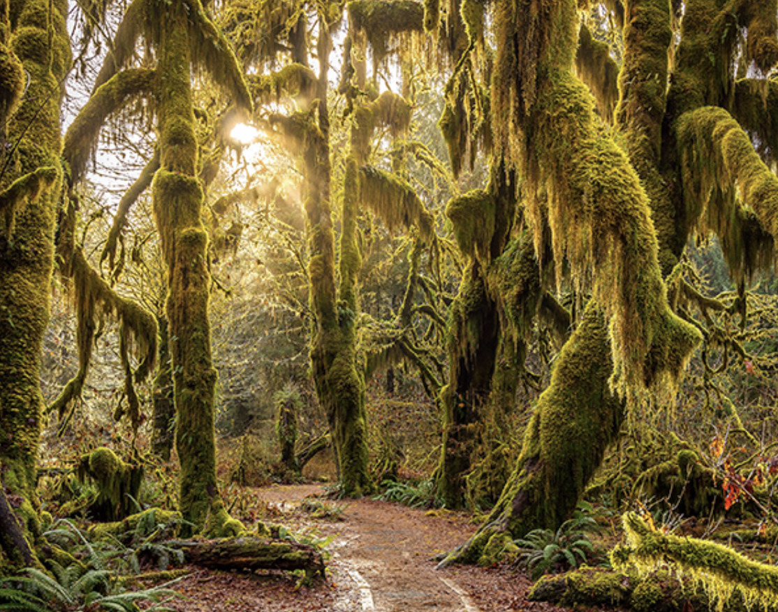 Elope in Hoh Rainforest in Olympic National Park