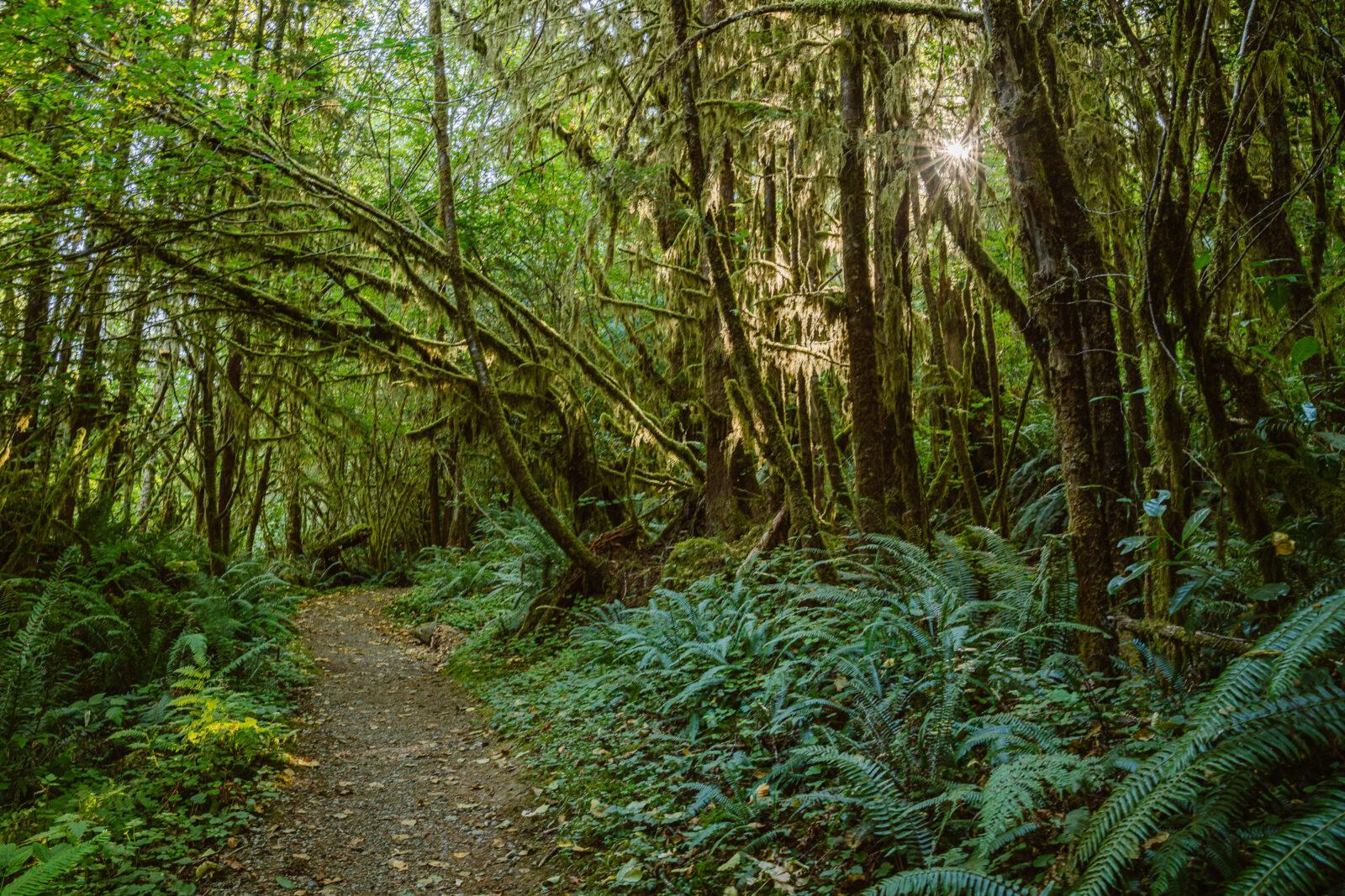 Rainforest at Lake Quinault Lodge